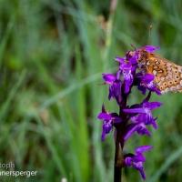 Schmetterlinge und Blütenpracht