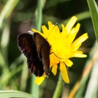 Schmetterline verschiedenster Arten