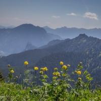 Trollblumen-Panorama